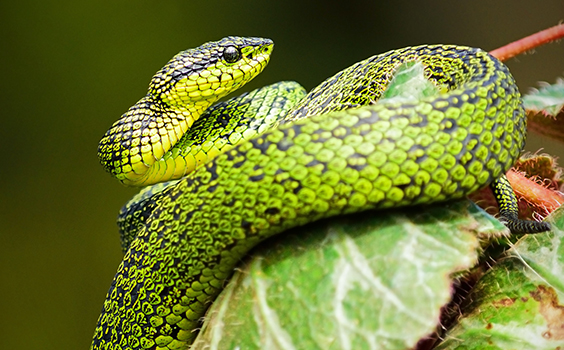 Be a Good Snake Unto the Lord